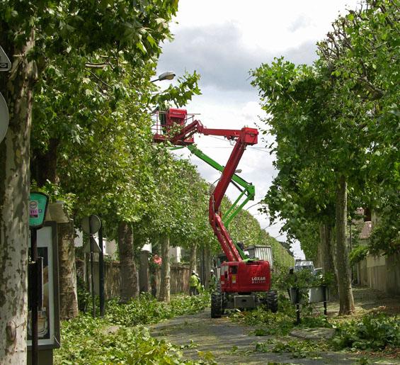 Prot ger et renouveler nos arbres un objectif for Prix de l elagage d un arbre